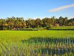 Rice Fields and walking in the village is a true delight
