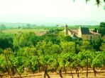 Vineyards surrounding the chateau