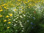 Some of the flowers in the wild flowers bed