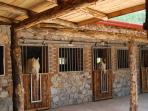 Horse Riding Available 5 mins Walk From Complex