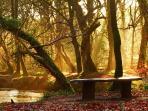 The beautiful Respryn Woods, Lanhydrock. 3 miles away.