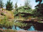 One of several ponds in the sub-tropical garden