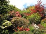 Rhododendrons and azaleas flower in springtime profusion