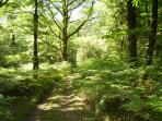 One of the many woodland walks in the grounds.