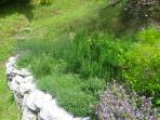 The aromatic garden