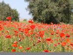 Puglia in spring
