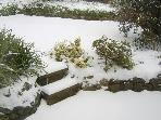 Cottage garden in the snow