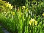Garden pond in the spring