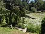 Lillypads, bullfrogs and stunning views across the ponds