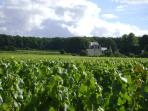 Our local vineyard with Chateau des Couldraies our neighbouring chateau