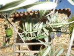 Fachada jardín privado