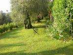 olive grove garden