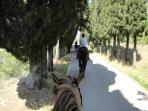 Wanna explore the surrounding on one of our reliable horses?