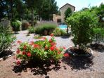 Mature flourishing garden with flowering shrubs and fruit trees