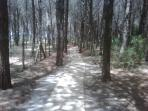 Pathway Through Forest to Beach