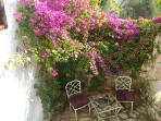 Terrace between flowers