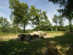 Via cornfields to 5,000 year old megalithic tombs