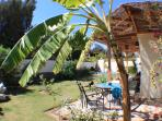 South side of the garden with banana tree and extra sunloungers.