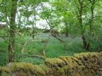 A wood near Lochaline