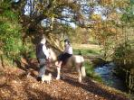 Walks with Callie, Maggie the puggle and Fluff our pony just minutes from our door along the river