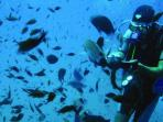 ideal location for diving, plenty of schools in the area.