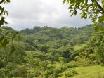 Some nearby jungle - perfect for off-roading on an ATV