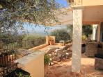 Olive Tree near Main Terrace