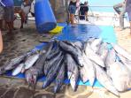 Big Game Fishing Port Mathurin ( +/- 5mns drive)
