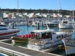 New Albufeira Marina get boat trips from here