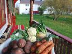 Organic vegetables and fruits are grown on the farm in summer- free to be used by my guests
