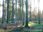 Le Forêt de Cerisy