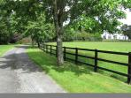 Private Lime tree avenue leading to Coolclogher House.