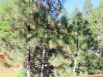 Quiet and Private Surroundings, Just steps to National Forest