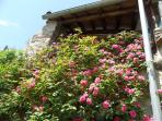 Cascade of scented roses on balcony from below