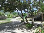 Tropical Landscape Mont Vernon