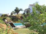 Lemon trees around the pool