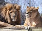 Newquay Zoo is a great place to spend the afternoon. Just 10 minutes drive away