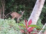 Deer below Villa