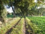 chemin de randonnée le long de la propriété