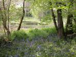 The Bluebell wood and lake