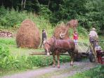 Horse-cart, loading hay