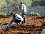 The field for the cultivation of organic products