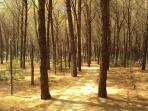5 min walk through pine & eucalyptus forest to beach