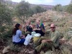 After olive picking... lunch and a cold beer