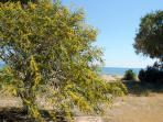 Beach at Iskele