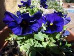 Las flores de los meses de julio y agosto.