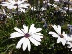 Las flores de los meses mayo y junio
