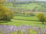 Bluebells on hedgerows and views across valley to the farm