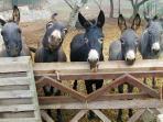 Giardini di Marzo - our donkey stars !!!