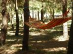 Or lie in a hammock in the shade of the pine trees